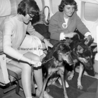 DIADEM Leader participants with their new guide dogs aboard an airplane.jpg
