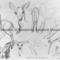 Sketches from life (deer head studies) - drawing.jpg